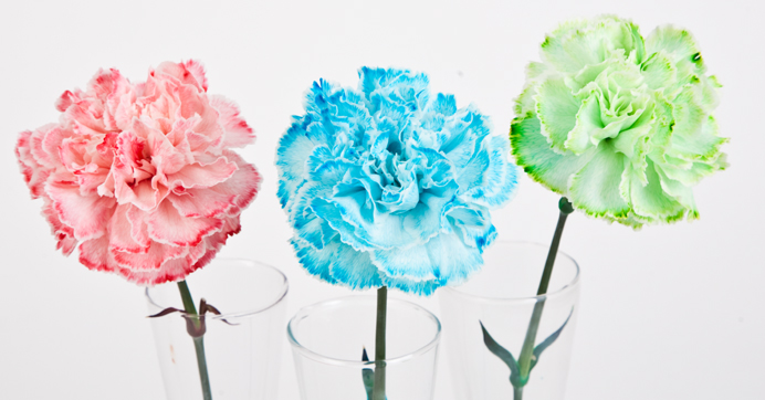 food color flowers experiment science in full bloom