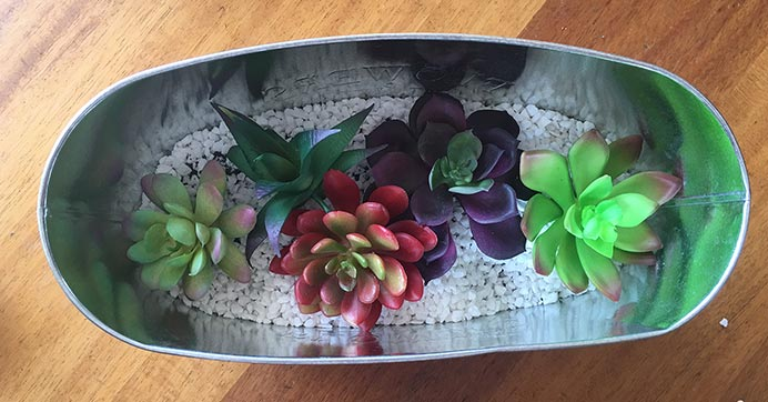 Insert the succulents in the planter